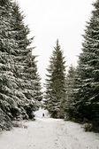Höga träd — Stockfoto