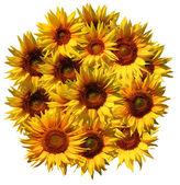 Sonnenblumen-muster — Stockfoto