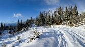 Straße im winterwald — Stockfoto