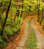 Old road in forest — Stock Photo