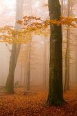 Mist — Stock Photo