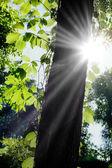 Güneş ışığı — Stok fotoğraf