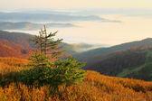 Autumn mountains — Stock Photo