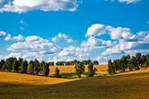 Field under sky — Stock Photo