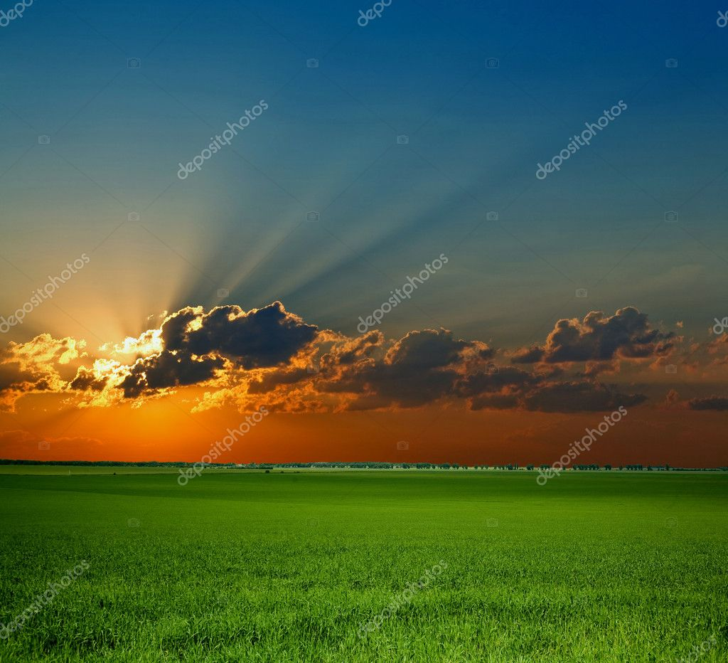 Sunrise on field. An image of green field. — Stock Photo #8564691