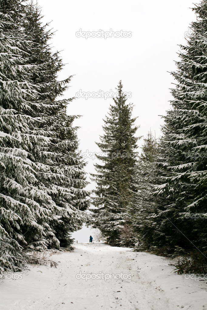 Stock photo: nature: an image of beautiful winter forest — Stock Photo #8567582
