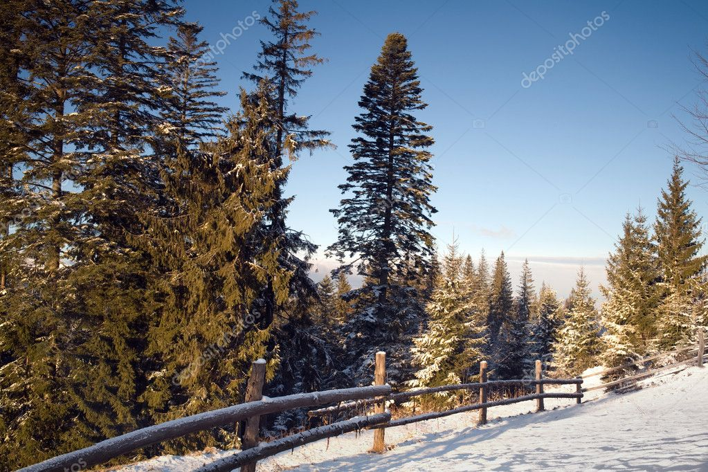 An image of green furtrees and a white field — Stock Photo #8567603