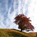 Autumn tree — Stock Photo #8571737