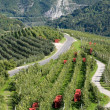 Apple orchards in mountains — Stockfoto