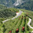 Apple orchards in mountains — 图库照片