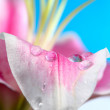 Stock Photo: Petal raindrop