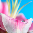 Petal raindrop — Stock Photo