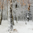 Stock Photo: First snow in a forest