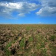 Stock Photo: Field with some grass