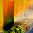 Hop and barley — Stock Photo