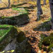Stones in autumn forest - Stock Photo