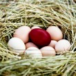 Eggs in a nest - Stock Photo