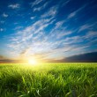 Sunset over green crops — Stock Photo
