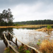 Lake in forest -  
