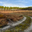 Road in forest -  