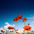 Field with poppies under sky — Stock Photo #8574563