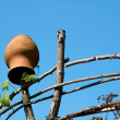 Jug on fence — Stock Photo