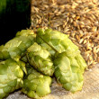 Stock Photo: Pineals of hop and corn of sty