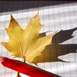 Pencil and maple leaf — Stock Photo