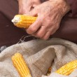 Old hands with corn — Stock Photo