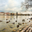 River Vltava in Prague — Stok fotoğraf
