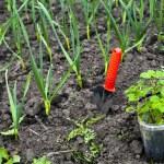 Gardening — Stock Photo #8575512