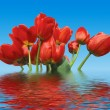 Reflection of tulips — Stock Photo