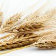 Barley — Stock Photo #8575731