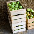 Stock Photo: Boxes with apples