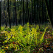 Fern in a forest - Stock Photo