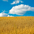 Cloud and field — Stockfoto