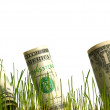 Stock Photo: Dollar in grass