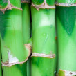 Stock Photo: Bamboo stems