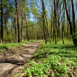 Woodland road — Stockfoto