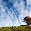 Tree on a hill — Stock Photo
