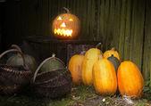 Shining pumpkins — Stock Photo