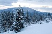 Bergen en bos — Stockfoto