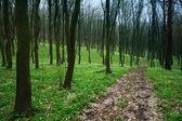 Lane v lese — Stock fotografie