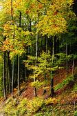 Dans une forêt — Photo
