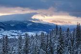 Gór i lasów — Zdjęcie stockowe