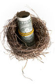 Roll of banknotes in nest. — Stock Photo