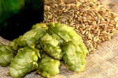 Pineals of hop and corn of sty — Stock Photo