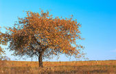 Solitude tree — Stock Photo
