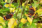 Mariposa sentado — Foto de Stock