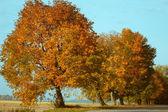 деревья у дороги — Стоковое фото
